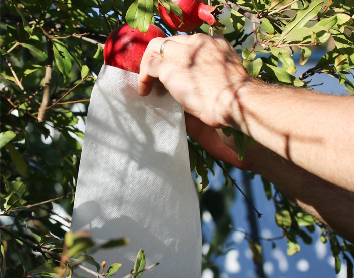 Pomegranate Anti Bird Protection Bag