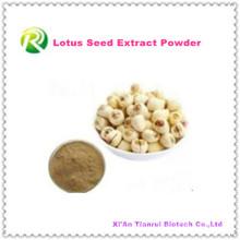 Poudre de graine de Lotus d'extrait de plante 100% naturel de haute qualité