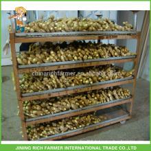 Fresh Ginger Exporter Chinese Ginger 150g jusqu'à 7kg / 8kg Boîte en PVC