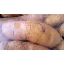 Nueva patata fresca de la cosecha 100g para arriba