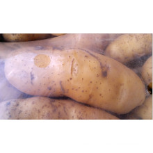 New Crop Fresh Potato 100g up