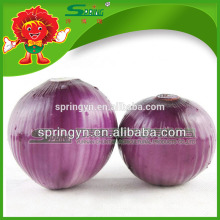 Chinese fresh red onions in mesh bag