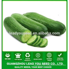 NCU071 Chongwu hybrid quality cucumber seeds for greenhouse