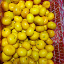 Gute Qualität Kleine süße Baby Mandarine