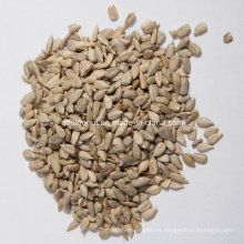 Origen chino Semilla de semillas de girasol