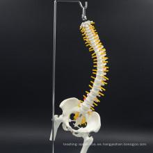 Regalo promocional al por mayor modelo de columna vertebral de tamaño natural