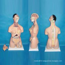 Human Torso Anatomical Model for Medical Teaching (R030103)