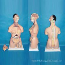 Modelo anatômico do torso humano para o ensino médico (R030103)
