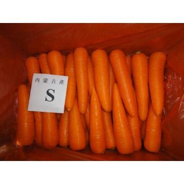 6,5 kg carton d'emballage de jus de carotte frais pour Dubai JEBEL ALI