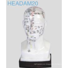 Modelo de cabeza de acupuntura (Headam20)