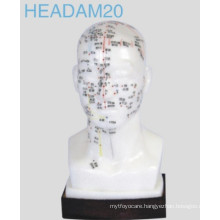 Head Acupuncture Model (Headam20)