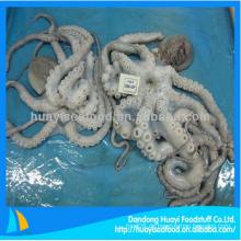 Frisch gefrorener Whiparm-Oktopus mit perfektem Preis