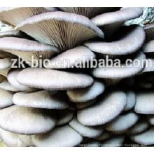 Prix de gros chinois Champignons d'huîtres séchées bio