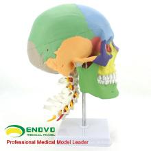SKULL11 (12337) Medizinische Wissenschaft multifunktionale menschliche Schädel Cervical Wirbelsäule Modell
