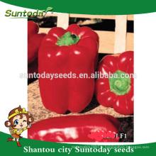 Suntoday Légumes asiatiques NON GMO F1 Organic up bell poivrons piment graines (21018)