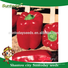 Suntoday Asian vegetable NON GMO F1 Organic up bell sweet pepper chilli seeds(21018)