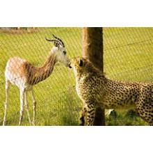 Enceinte de léopard / clôture / maille de cage