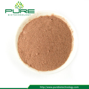 Pure nature organic Rhodiola rosea powder
