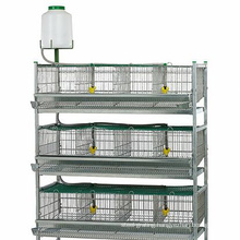 Automatic Quail/chicken farm cage New design quail/chicken layer cage for poultry farm