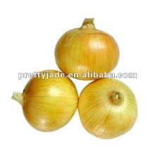 Cebolla roja fresca