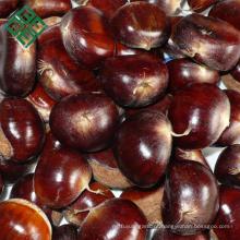 exportação de castanhas frescas cruas