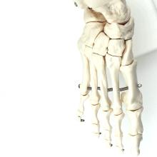 JOINT01 (12347) Anatomía médica Esqueleto humano de pie de tamaño humano Modelos anatómicos