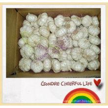 fresh vegetable import chinese garlic