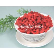 Chine Ningxia Organic Goji Berry