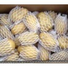 2016 Fresh Holland Potato en vente