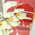 TUNN ANATOMY 12016 Torse 29 Pièces, 85 cm Deluxe-Sex Médical Corps humain Echange Muscles Modèles Anatomiques
