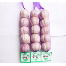 import fresh chinese 3p 4p 5p package 10kg carton pure white garlic