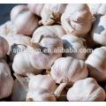 Nicht-umweltschädliche Basis pflanzen natürlichen Knoblauch weißen Knoblauch aus China
