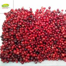 Wholesale distribute supplier IQF Frozen lingonberry