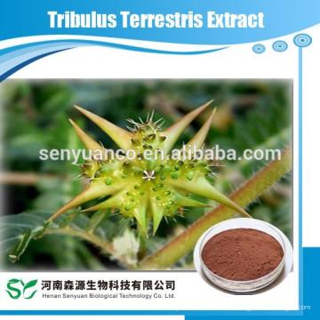 Extracto de Tribulus Terrestris
