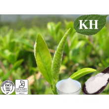 Anti-Cancer Natural Green Tea Extract L-Theanine 98%