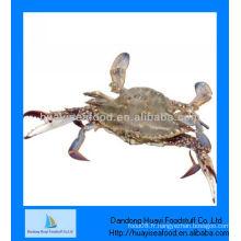 Crabe congelé de haute qualité congelé