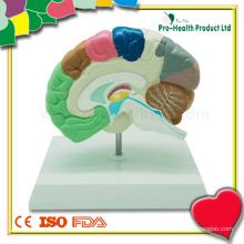 Educação médica modelo de cérebro plástica
