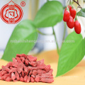Health fruit ningxia zhongning low pesticide dried goji berry with much Vitamin C