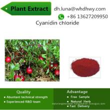 Help Protect Your Eyes Cyanidin Chloride 1-Benzopyrylium