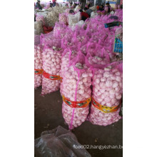 Best Quality Chinese Garlic with Best Selling