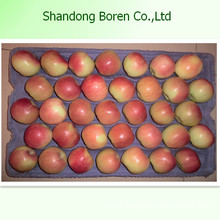 Bulk Cheap Fruit Fresh Gala Apple