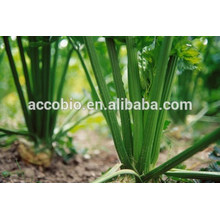 China wholesale Parsley, 100% herbal extract Parsley Extract