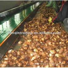 2012 Chinese fresh taro