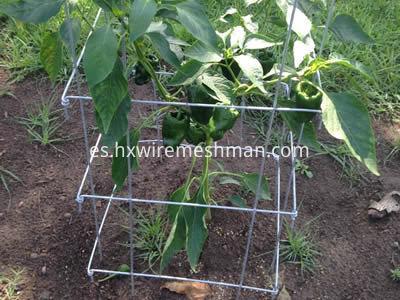 ss-welded-mesh-plant-cage