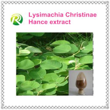 Fonte da fábrica dos produtos da Bio-Tecnologia diretamente com extrato de erva competitivo de Christina Loosestrife