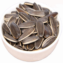Sunflower seed with large shell
