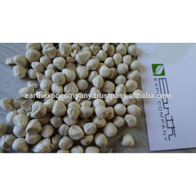 Moringa Seeds Supplier From India