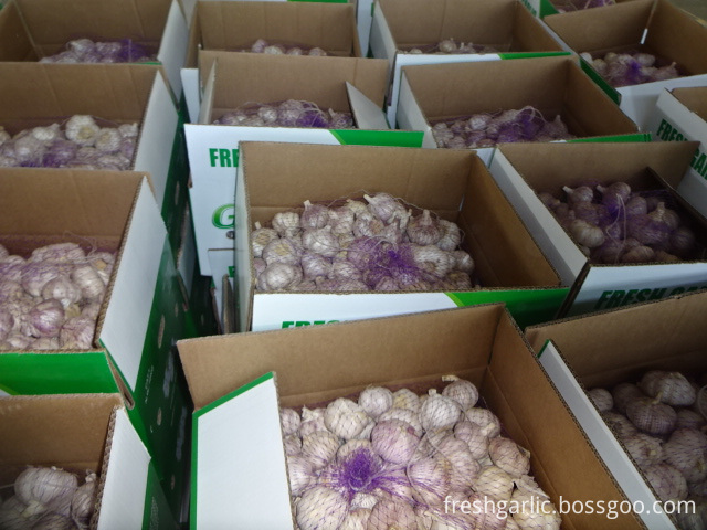 The Garlic Fresh New Crop