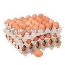 Bandeja de 30 huevos utilizada para el transporte de huevos de gallina
