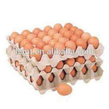 30 eggs tray used for the carriage of chicken eggs